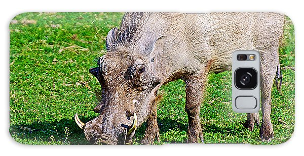 Warthog In Addo Elephant Park Near Port Elizabeth-south Africa  Galaxy Case