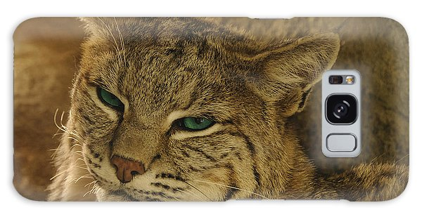 Wary Bobcat Galaxy Case by Penny Lisowski