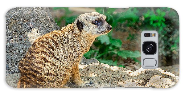 Meerkat Galaxy S8 Case - Watchful Meerkat by Jon Woodhams