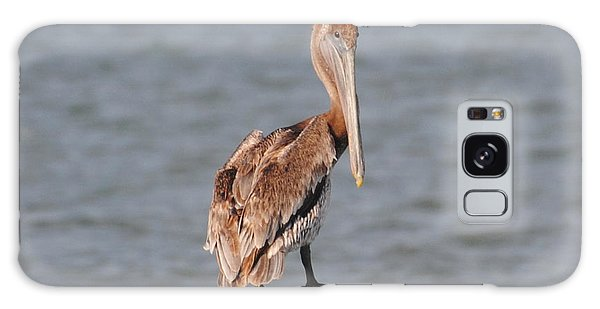 Watchful Pelican Galaxy Case
