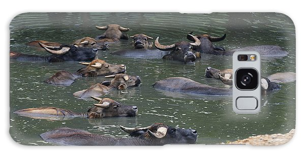Water Buffalo Galaxy Case