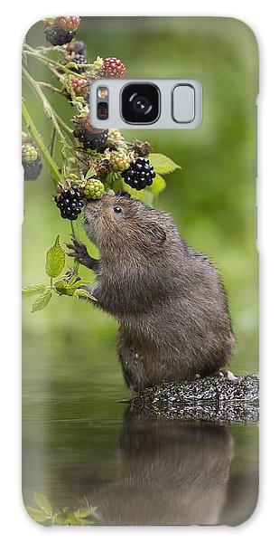 Water Vole Eating Blackberries Kent Uk Galaxy Case