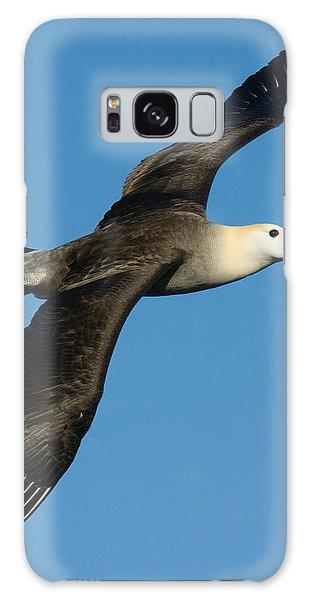 Waved Albatross Diomedea Irrorata Galaxy Case