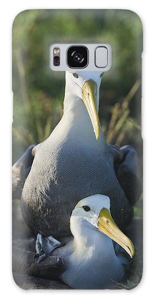 Waved Albatross Mate In Galapagos Galaxy Case