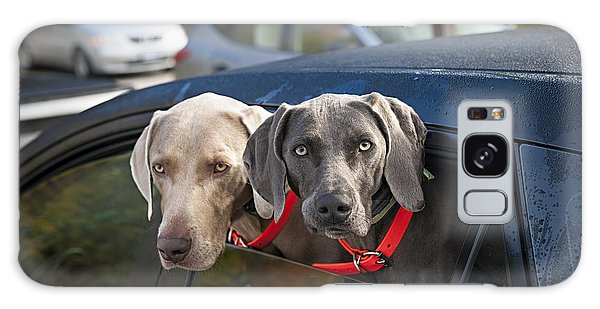 Patient Galaxy Case - Weimaraner Dogs In Car by Elena Elisseeva