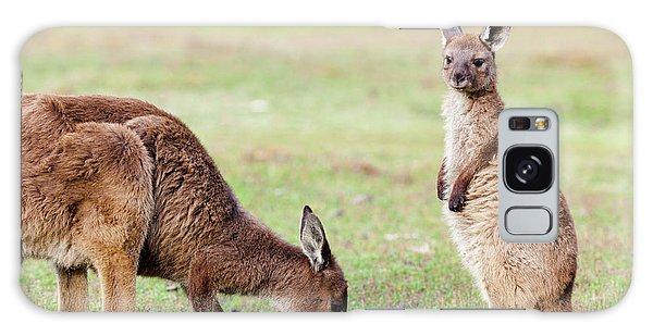 Western Grey Kangaroo (macropus Galaxy Case