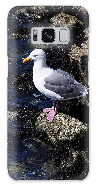 Western Gull On Rocks Galaxy Case