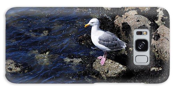 Western Gull On Rocks Galaxy Case