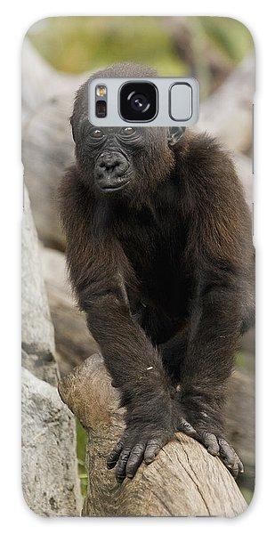 Western Lowland Gorilla Baby Galaxy Case by San Diego Zoo