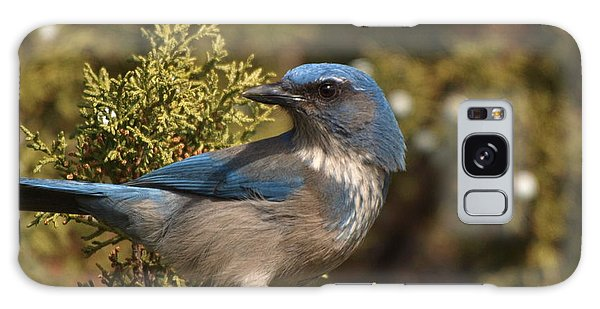Western Scrub Jay Galaxy Case by James Peterson