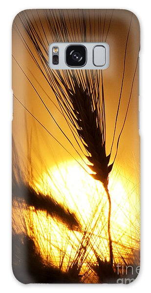 Wheat At Sunset Silhouette Galaxy Case