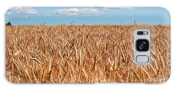 Wheat Field In Blue Sky Galaxy Case