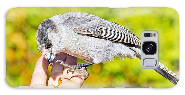 Whiskey Jack Or Gray Jay Eating Nuts From A Hand Galaxy Case