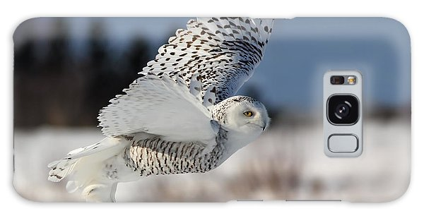 White Angel - Snowy Owl In Flight Galaxy Case by Mircea Costina Photography