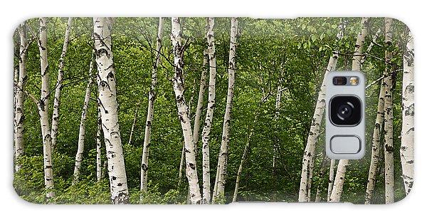 White Birch Galaxy Case
