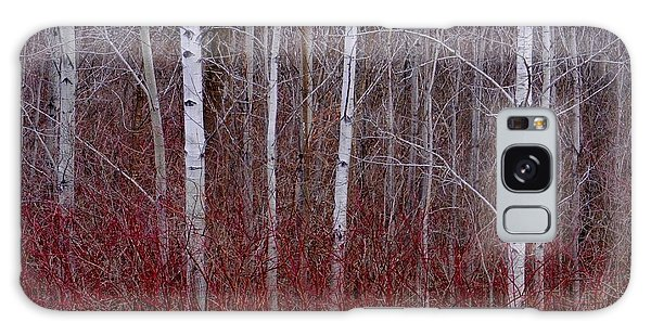 White Birch In The Adirondacks Galaxy Case