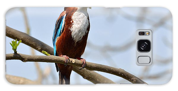 White Breasted Kingfisher Galaxy Case by Fotosas Photography