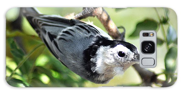 White Breasted Nuthatch Galaxy Case