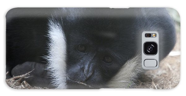 White-cheeked Gibbon - 0004 Galaxy Case by S and S Photo