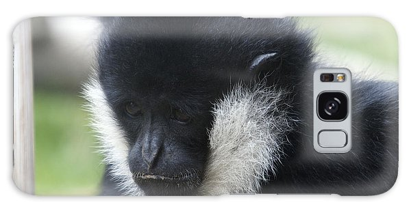 White-cheeked Gibbon - 0005 Galaxy Case by S and S Photo