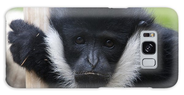 White-cheeked Gibbon - 0006 Galaxy Case by S and S Photo