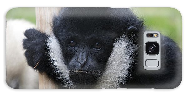 White-cheeked Gibbon - 0007 Galaxy Case by S and S Photo