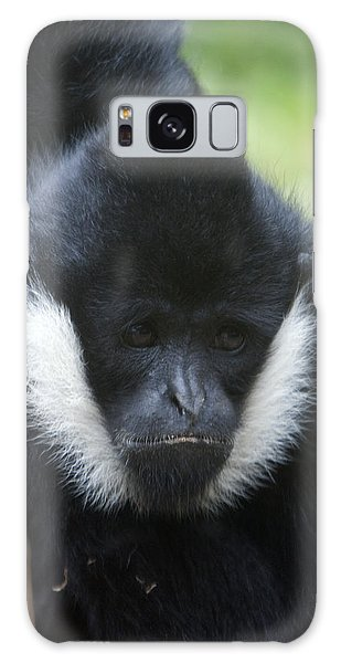 White-cheeked Gibbon - 0008 Galaxy Case