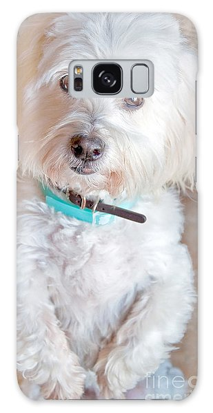 White Coton De Tulear Dog Standing Up Galaxy Case