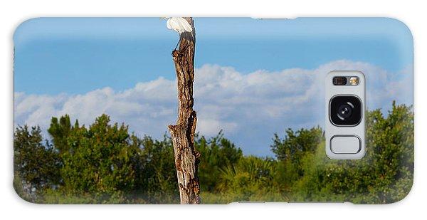 Boynton Galaxy S8 Case - White Crane On A Dead Tree, Boynton by Panoramic Images