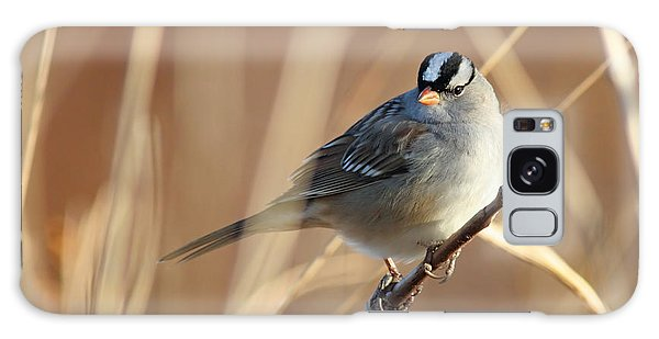 White-crowned Sparrow Galaxy Case