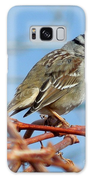 White Crowned Sparrow Galaxy Case by Heidi Manly