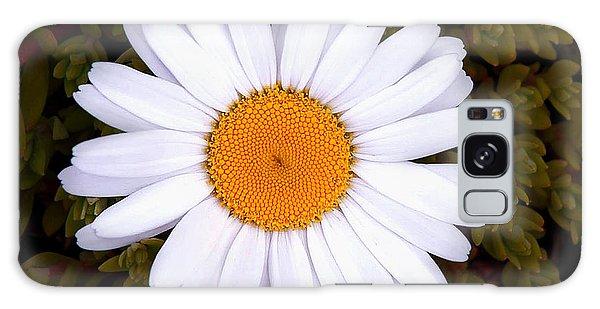 White Daisy In Bloom Galaxy Case by Gary Slawsky