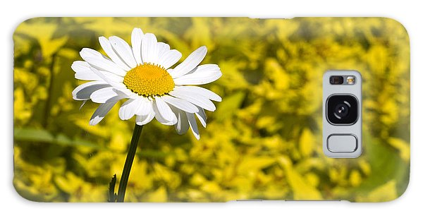 White Daisy In Yellow Garden Galaxy Case