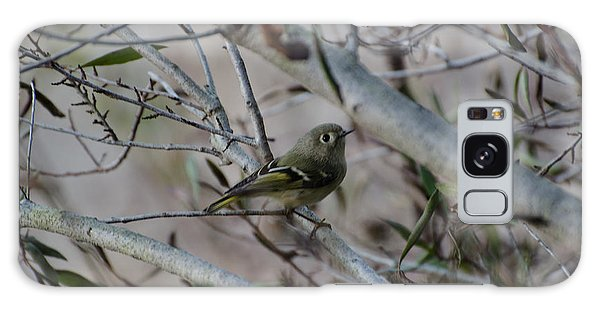 White-eyed Vireo Galaxy Case by Donna Brown