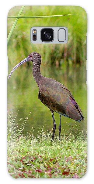 White-faced Ibis 2 Galaxy Case by Bob and Jan Shriner