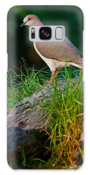 White-fronted Dove Galaxy Case