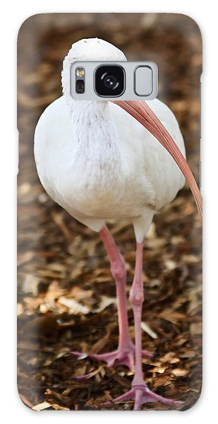 Ibis Galaxy Case - White Ibis by Adam Romanowicz