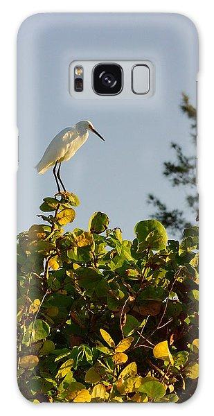 White Ibis And Sea Grapes Galaxy Case