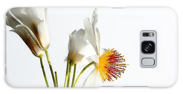 White Sparmannia Africana Plant. Galaxy Case