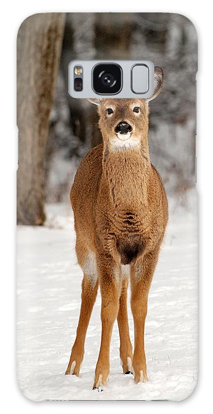 Whitetail In Snow Galaxy Case by Christina Rollo