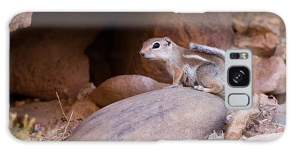 White-tailed Antelope Squirrel Galaxy Case
