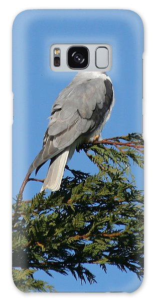 White-tailed Kite Perching Galaxy Case