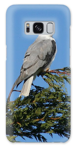 White-tailed Kite Perching Galaxy Case by Bob and Jan Shriner