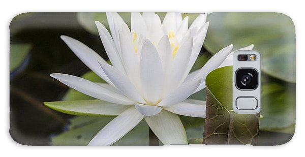 White Water Lily With Curiously Scrolled Leaf Galaxy Case