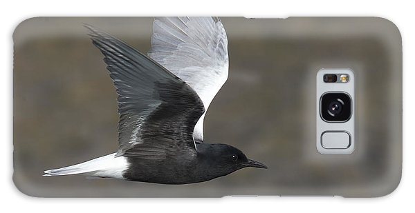 White-winged Tern Galaxy Case