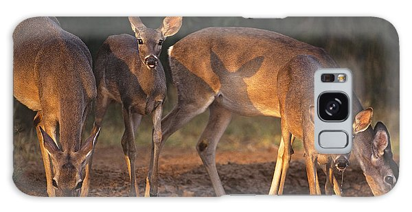 Whitetail Deer At Waterhole Texas Galaxy Case by Dave Welling
