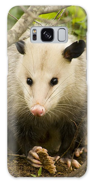 Who Says Possums Are Ugly Galaxy Case