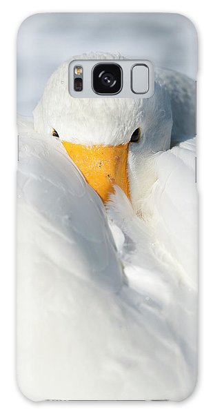 Behaviour Galaxy Case - Whooper Swan Resting by Dr P. Marazzi