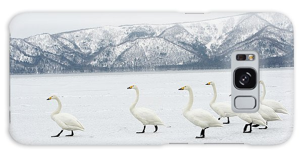 Behaviour Galaxy Case - Whooper Swans by Dr P. Marazzi