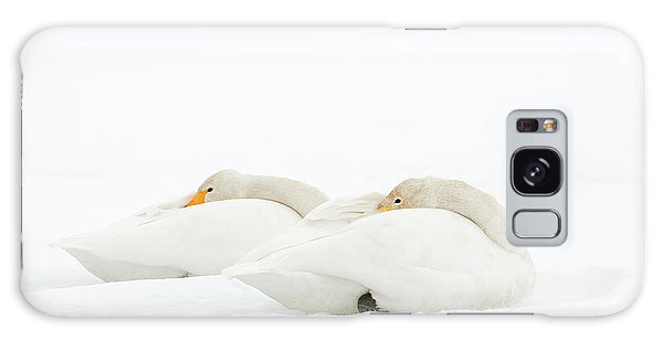 Behaviour Galaxy Case - Whooper Swans Resting On Snow by Dr P. Marazzi